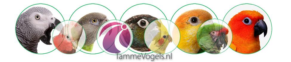 Tamme Vogels